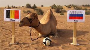 Россия - Бельгия: верблюд Шахин предсказывает поражение России